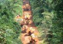 Trafic de bois: 22 personnes arrêtées à Kolda