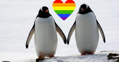 Deux manchots gays vont devenir papas
